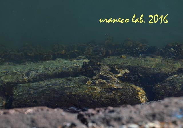 11月30日運河
