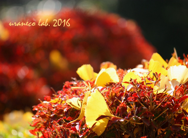 12月2日crimson yellow