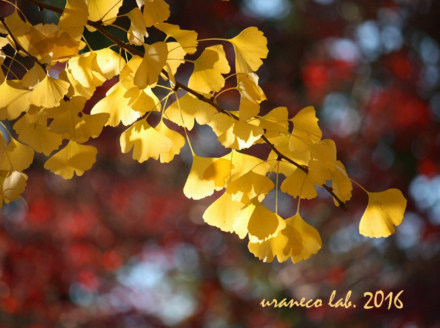12月2日crimson yellow 2