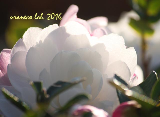 12月15日冬の輝き6