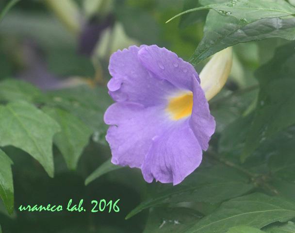 12月20日紫色の花