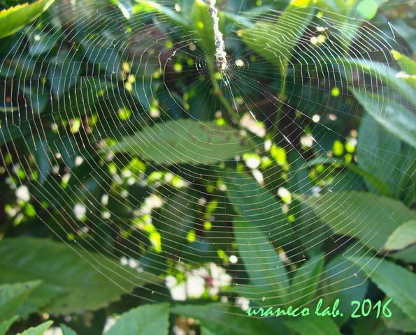 12月20日蜘蛛の巣