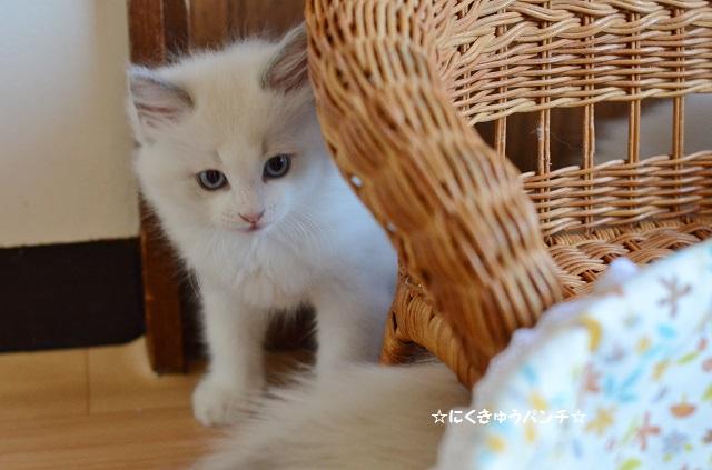 20110813リアンDSC_1664