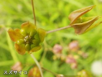 160609-kise-07.jpg