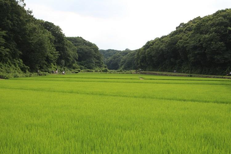 20160724寺家ふるさと村5a