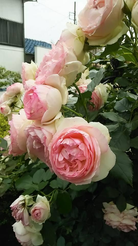 彫刻とバラの庭ー4