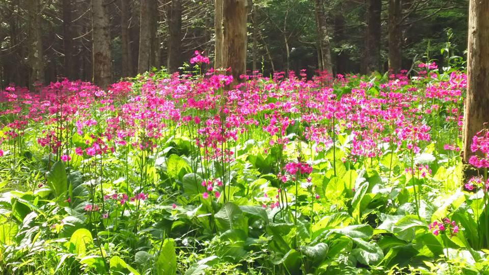 美しの森②
