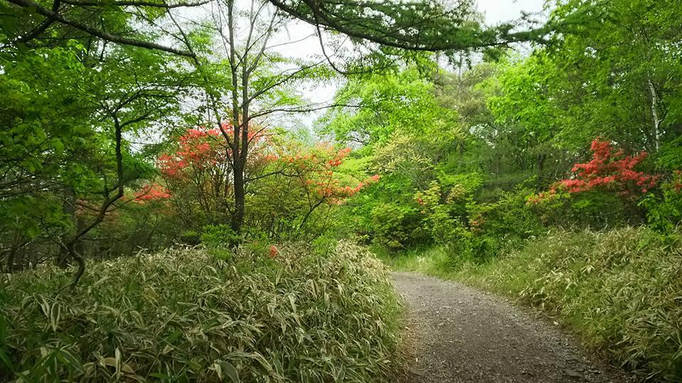 美しの森 ③