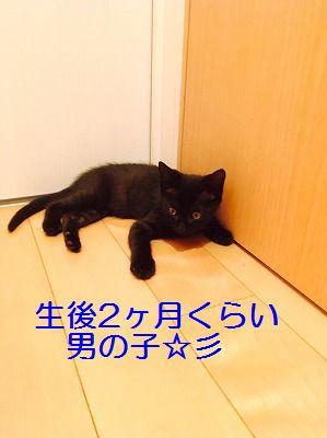 IMG_1238 - コピー