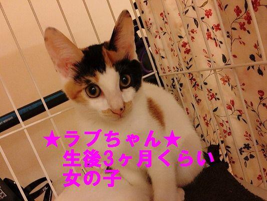 IMG_0220 - コピー