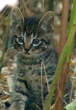 Kitten1605_004.jpg