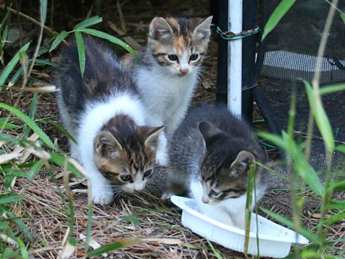 Kitten1605_006.jpg