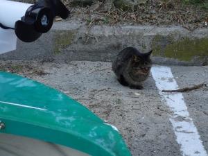 PC040033 ネコのような生き物にお供え