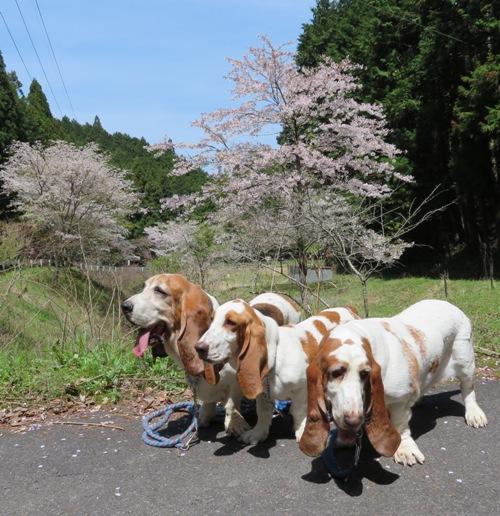 散歩0011