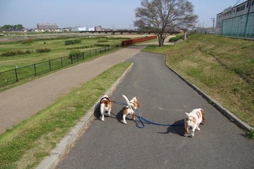 石川河川公園001