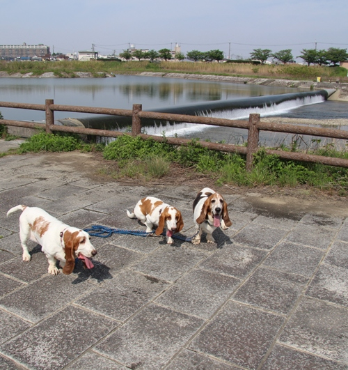石川河川公園010