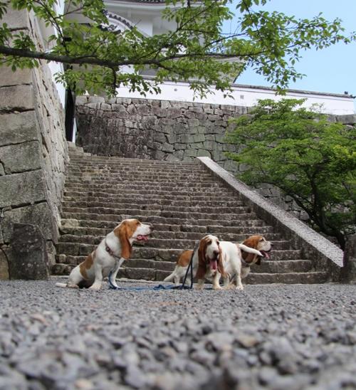 伊賀上野城0005
