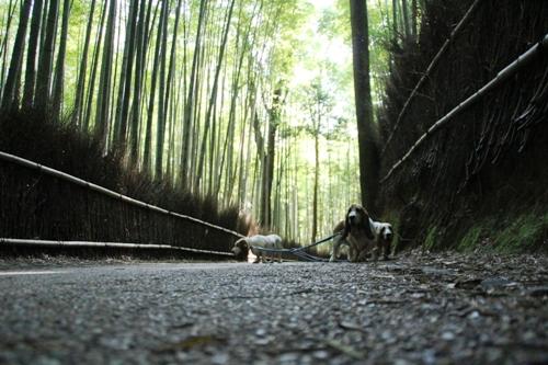 嵐山0006