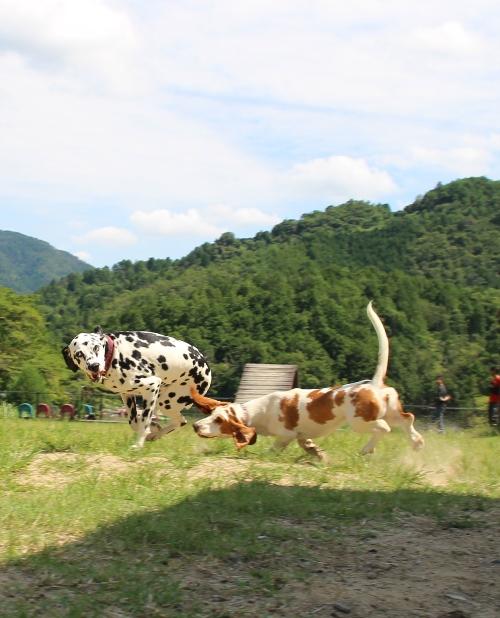 嵐山0022