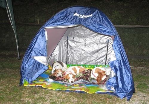キャンプ0050