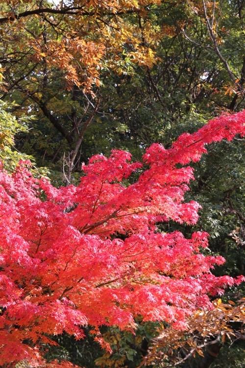 山田池公園0013