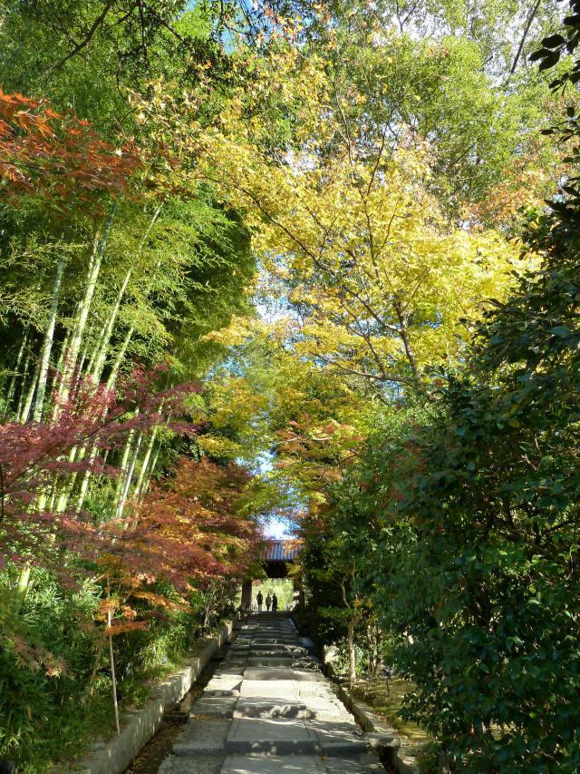 京都東山の秋5