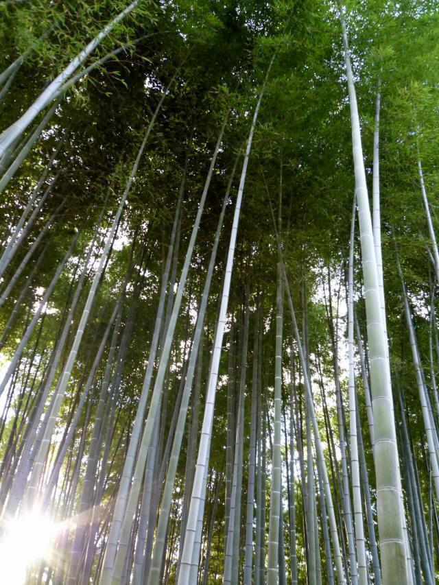 京都東山の秋7