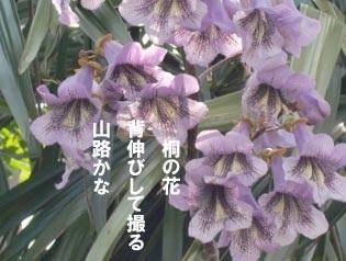 お題の桐の花