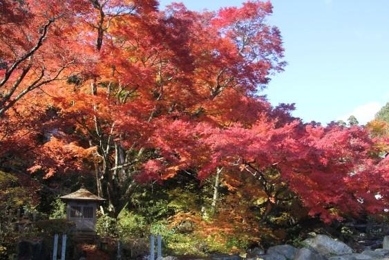 宝蔵寺の楓