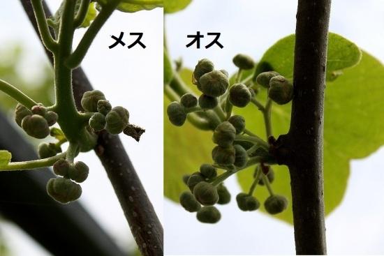 キウイ_1051 (2)