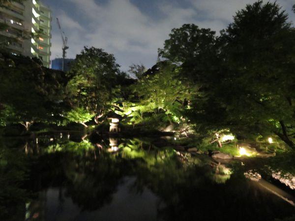 日本庭園の池