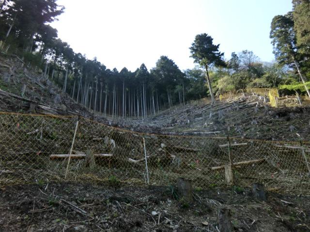 s-2広葉樹林化パイロット事業研修会 (9)