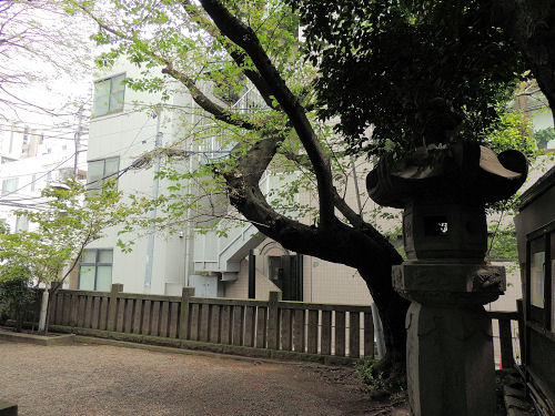 160421sakura12.jpg