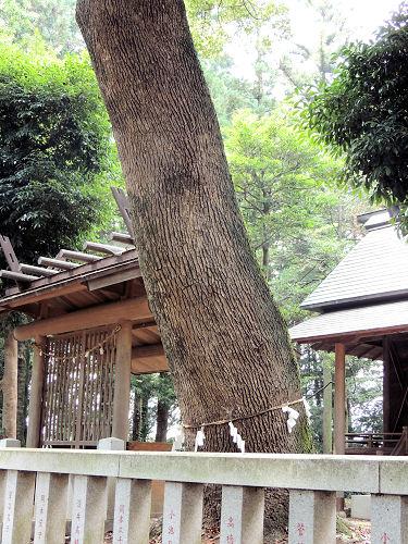 160705yoshimi23.jpg