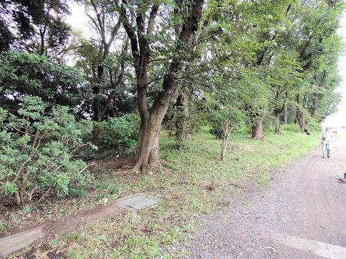 160730shiroyama11.jpg