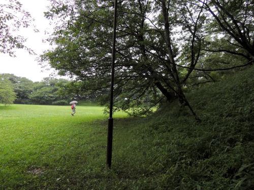 161119sakura77.jpg