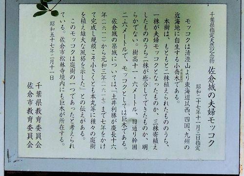 161119sakura78.jpg