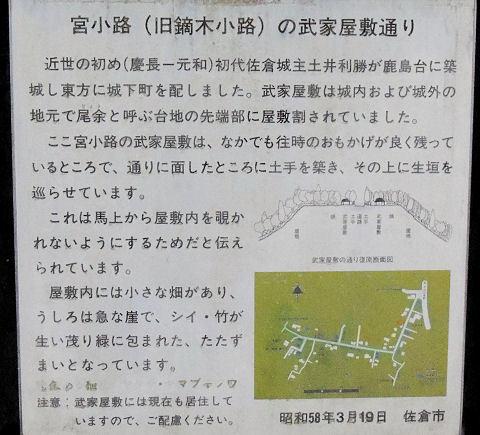 161119sakura89.jpg