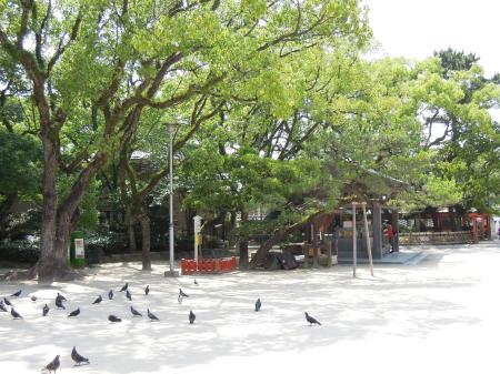 1606筥崎宮14