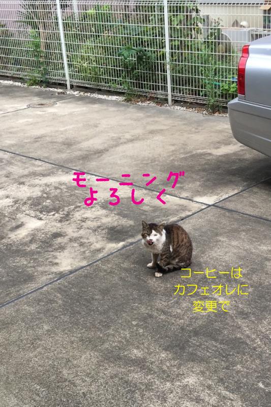 2016_10_11_20_06_06.jpg