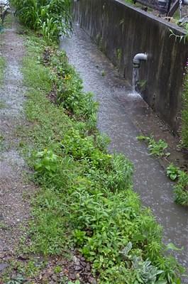 水路 あふれ出る雨水