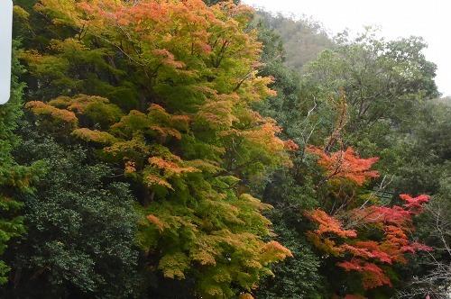 お宮さんの紅葉も始まりました。