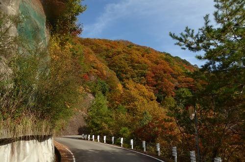 青倉神社道中の紅葉