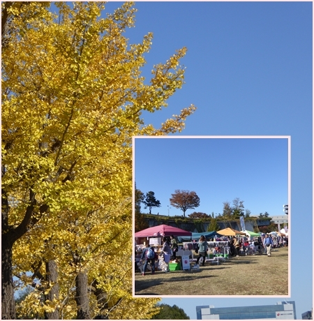 16-11-12up1.jpg