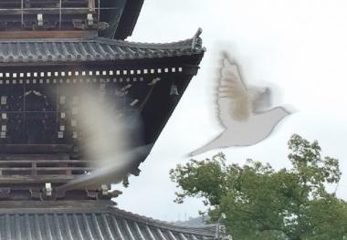 善通寺白鳩の部分拡大