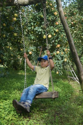 天龍峡農園りんご園のブランコ