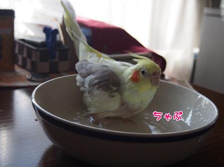 ちゃっぷ~ん