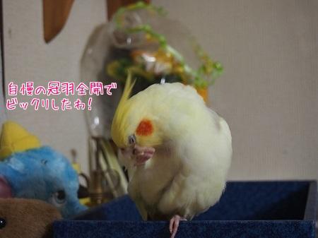 開けれない(T_T)