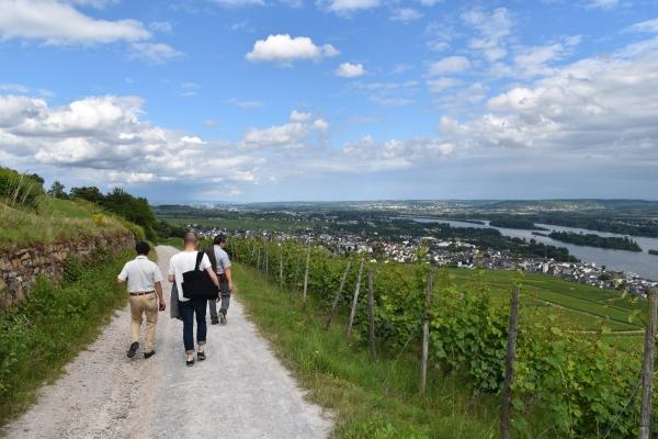 160703-葡萄畑を歩いて降りる