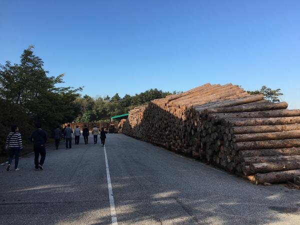 161010-山林組合中央会木材流通センター (2)